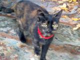Кошка, 7 месяцев